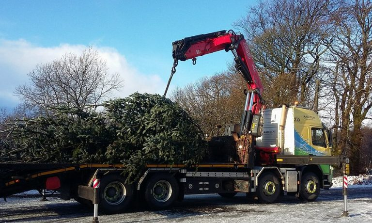 st-vincents-hospice-tree-malcolm-lorry